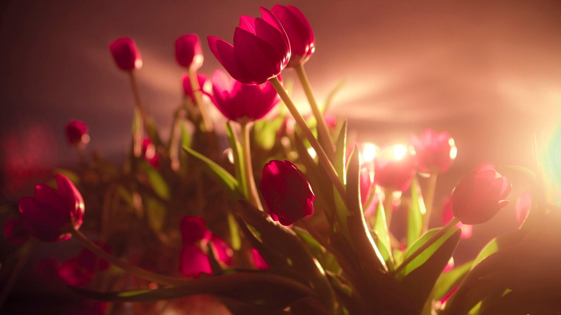 best flowers A5