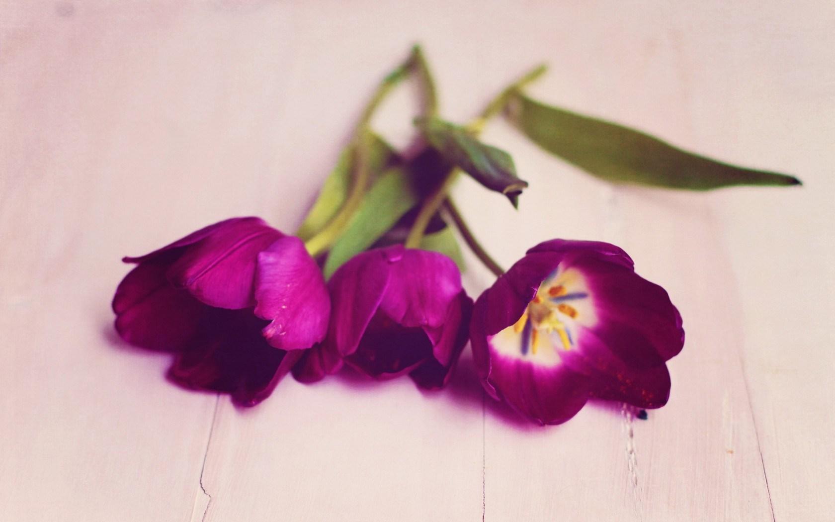 best flowers A6