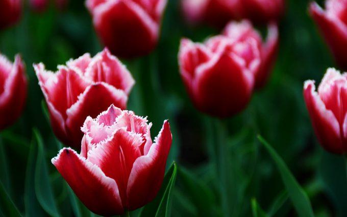 best flowers A7