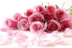 best red rose flower wallpaper