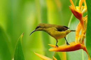 bird flower wallpaper