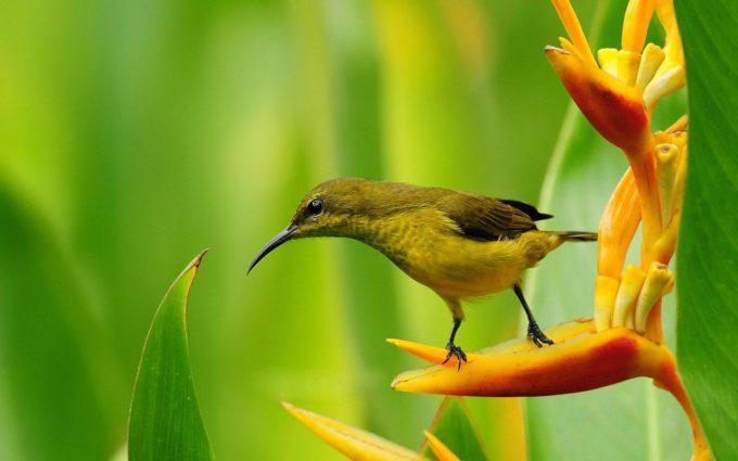 bird flower wallpaper