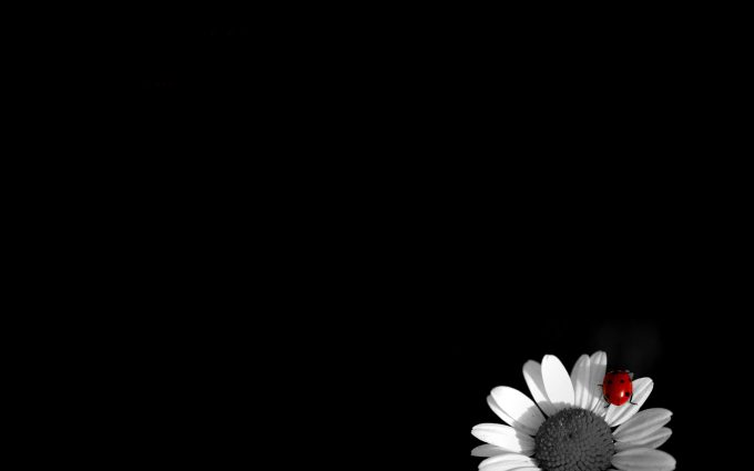 black and white flowers A2