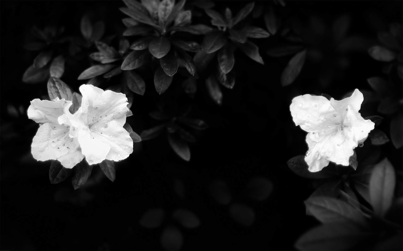 black and white flowers A3