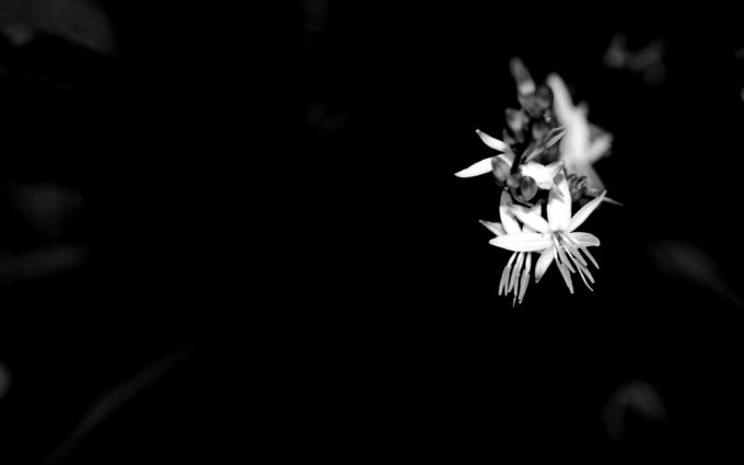 black and white flowers A4