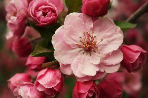 blossom A3