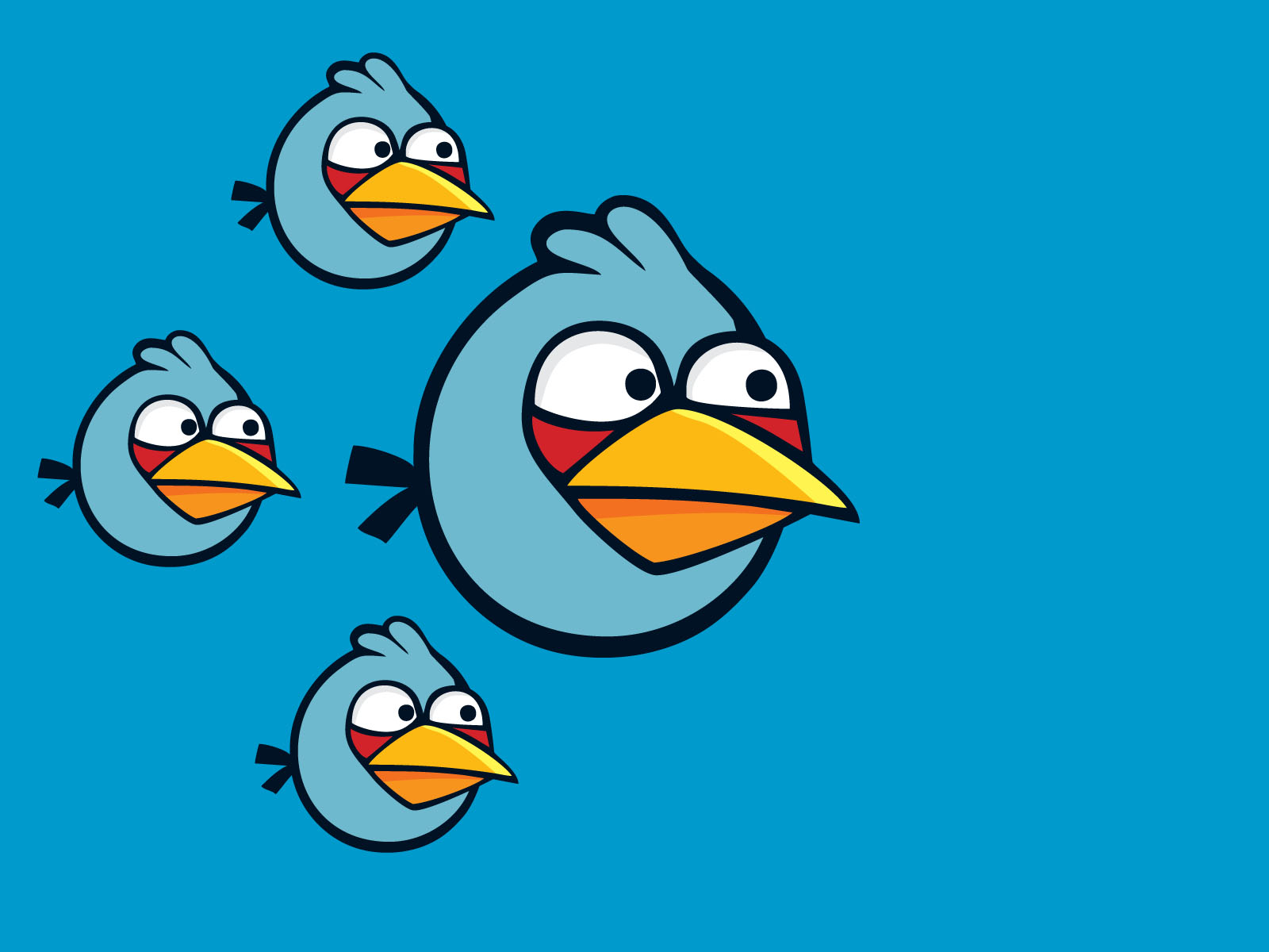 blue angry bird wallpaper
