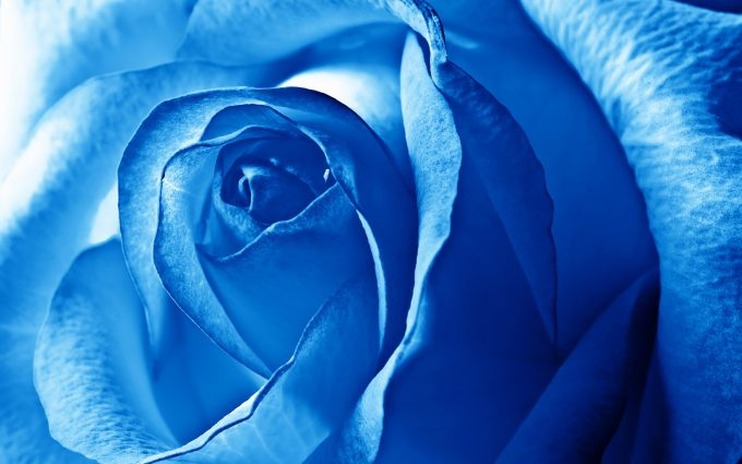 blue flowers 1080p