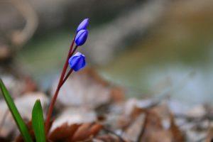 blue flowers 1920x1080p