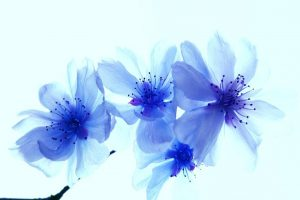 blue flowers abstract