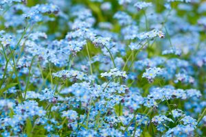 blue flowers cool
