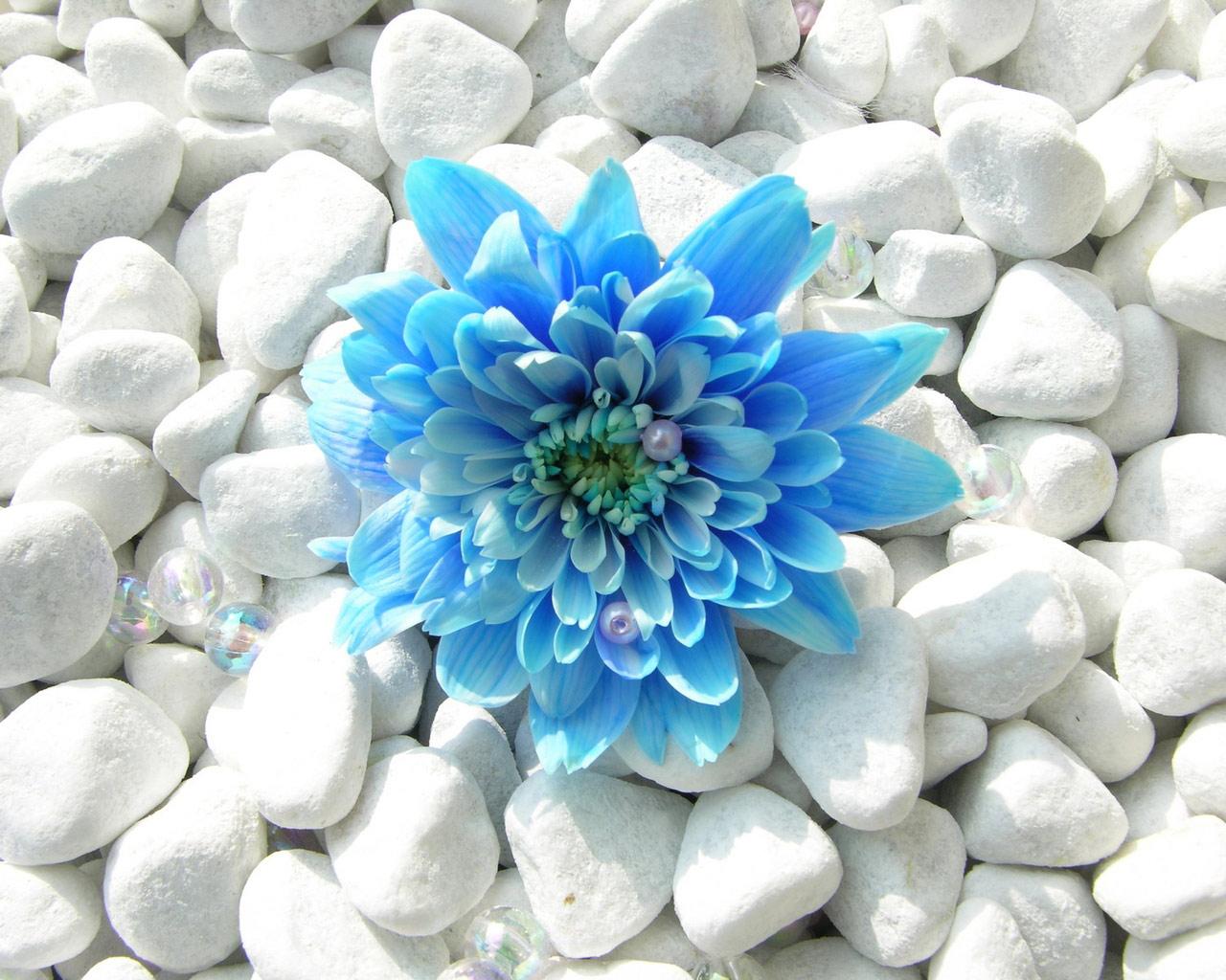 blue flowers cool wallpaper