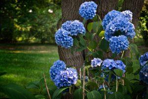 blue flowers download