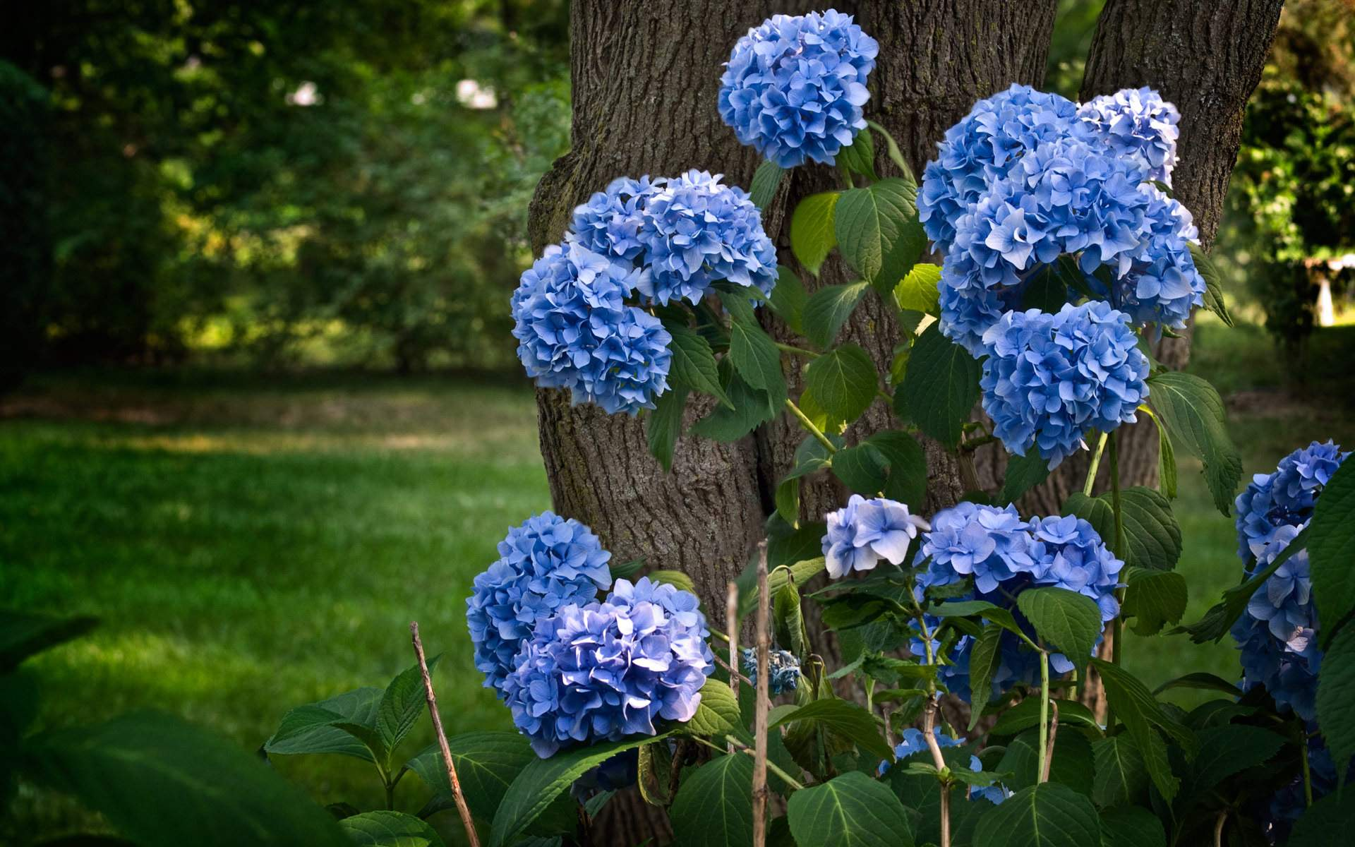 blue flowers download