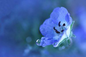 Blue Flower Wide Desktop Background