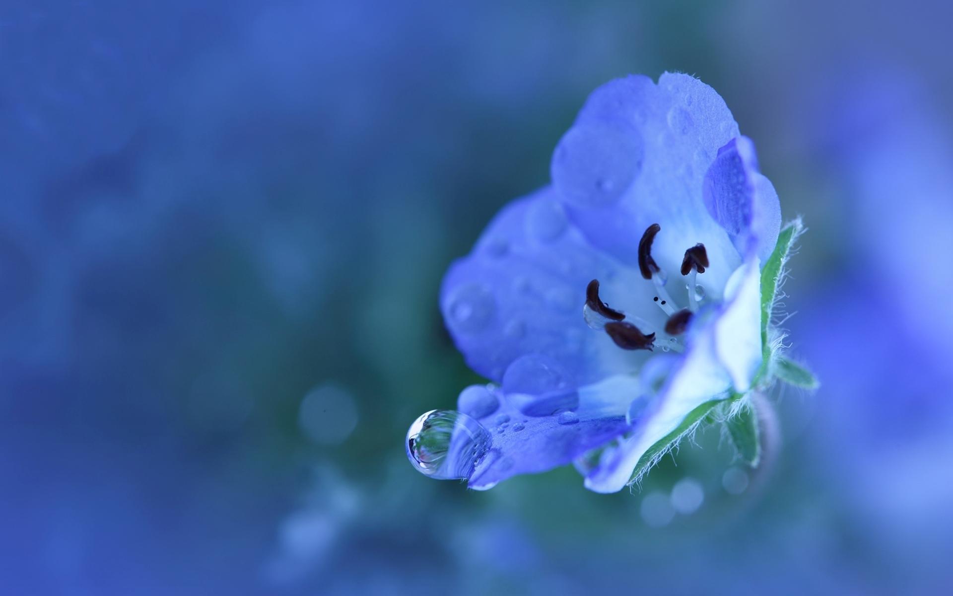 Blue Flower Wide Desktop Background Hd Desktop Wallpapers 4k Hd