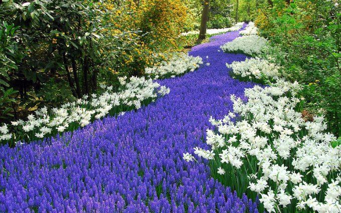 17 Mar 2007, Lisse, Netherlands --- Netherlands - 58th International Keukenhof Flower Exhibition --- Image by © RoyalPress Albert Nieboer/dpa/Corbis
