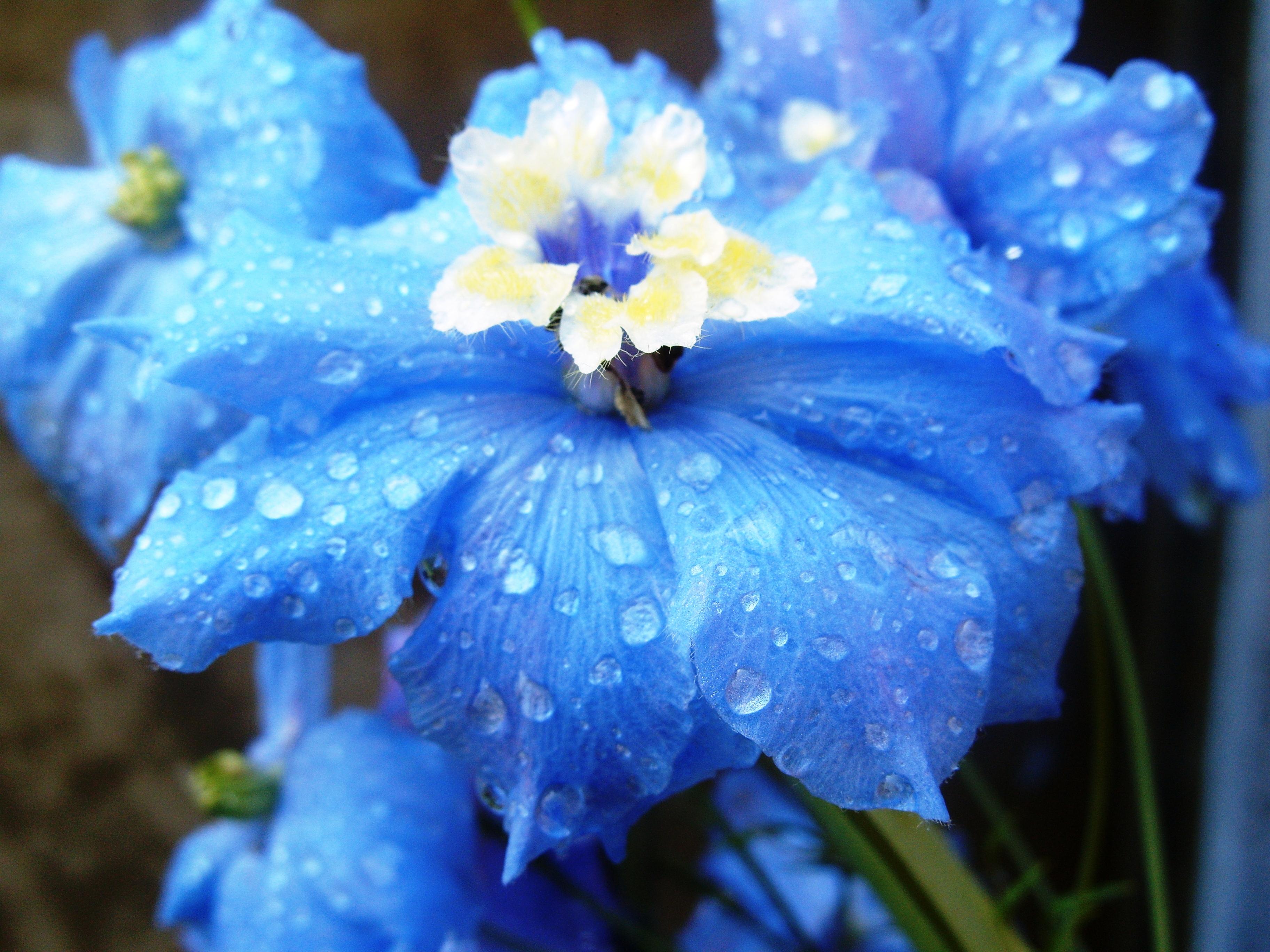 blue flowers image