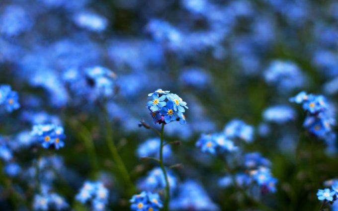 blue flowers love