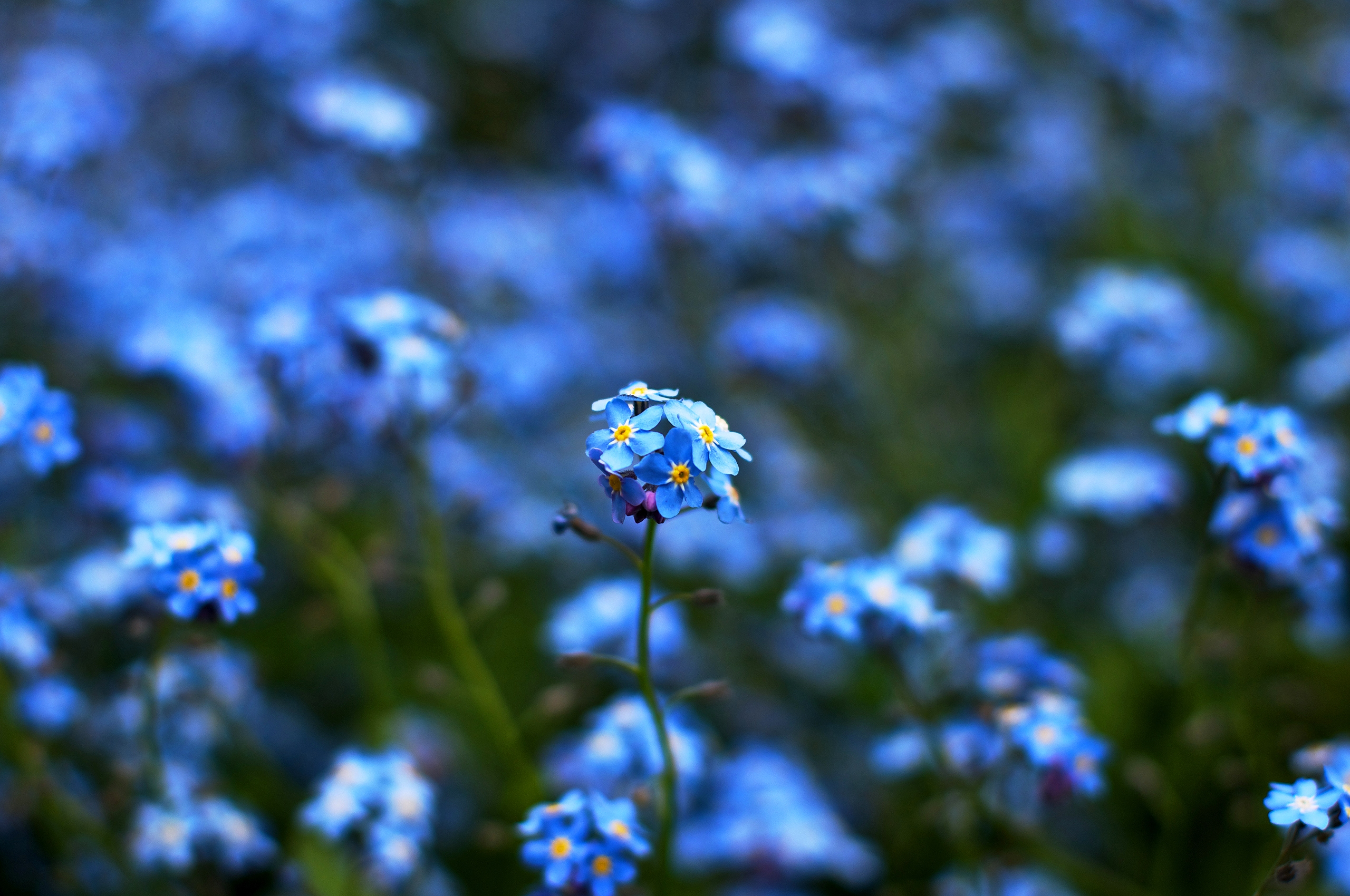 blue flowers love