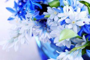 blue flowers nice