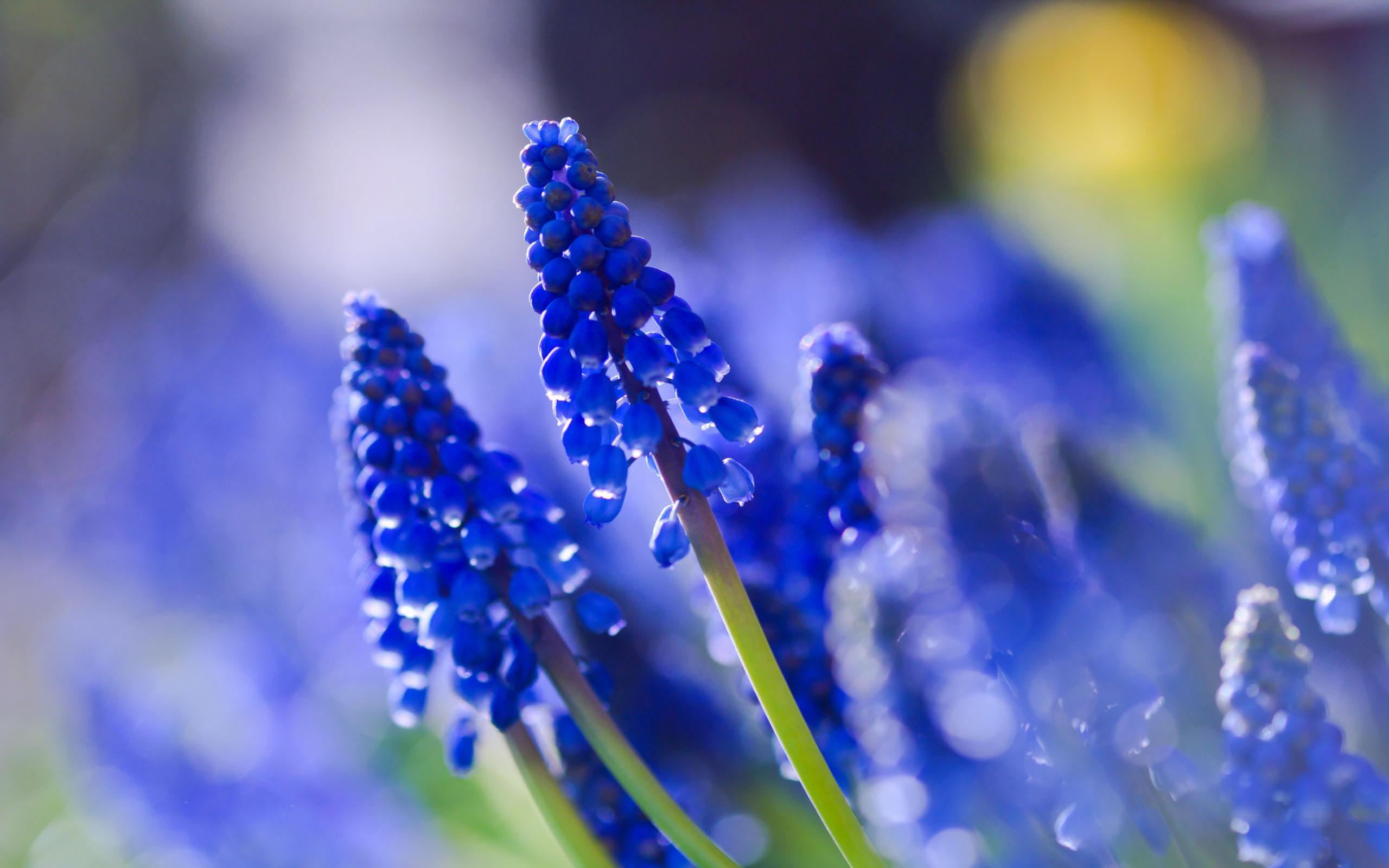 blue flowers summer