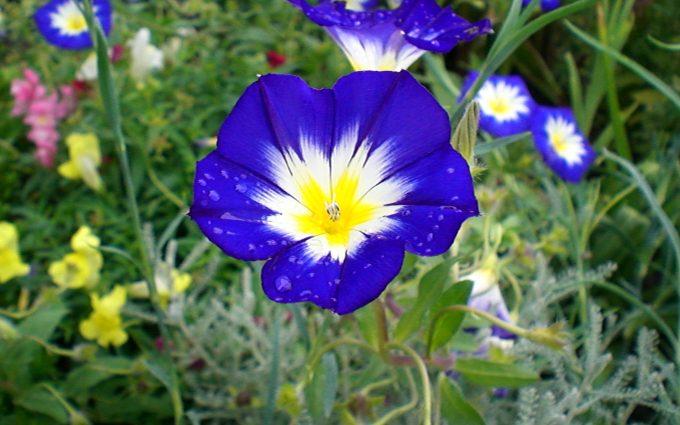 blue flowers unique