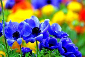 blue flowers vivid