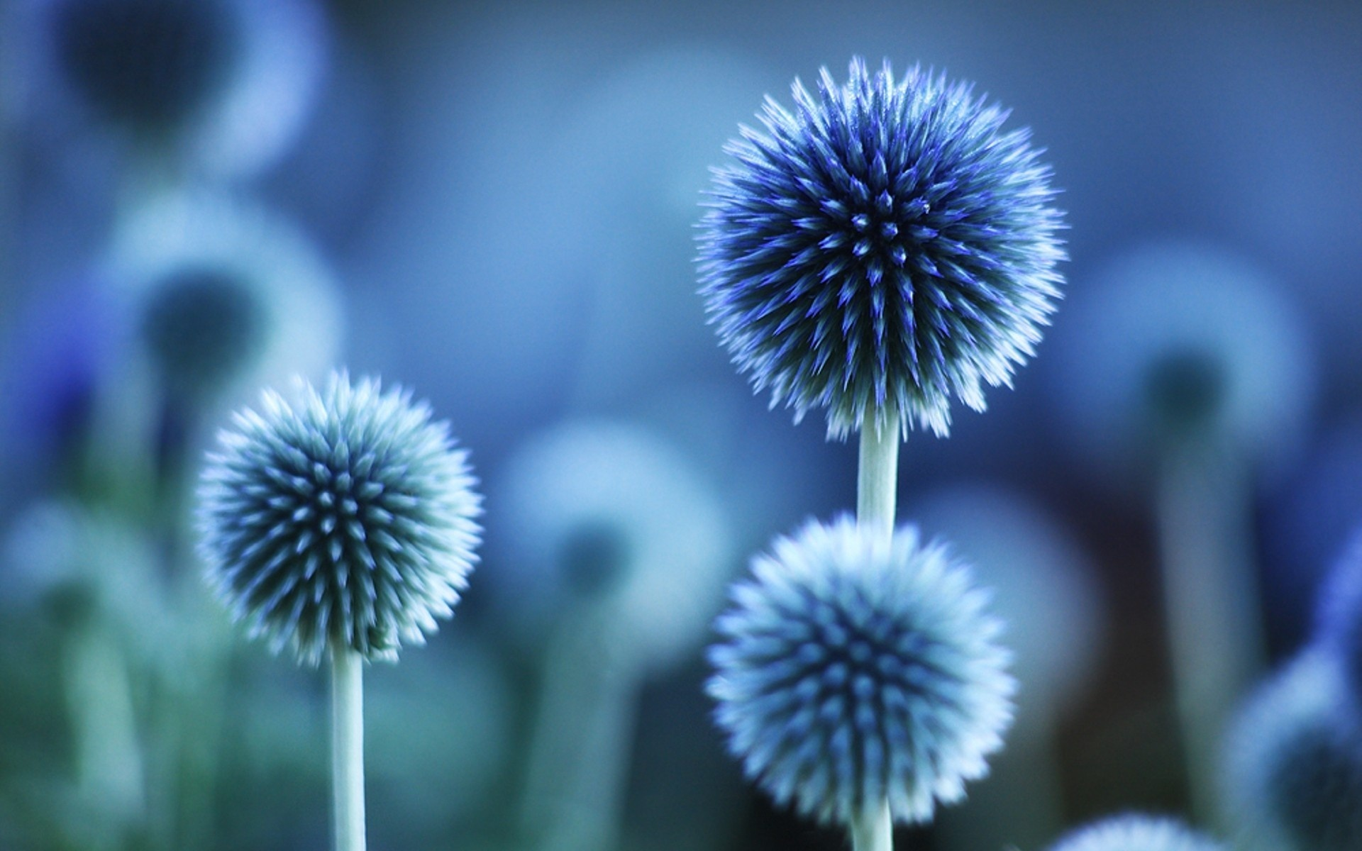 blue flowers wallpaper free