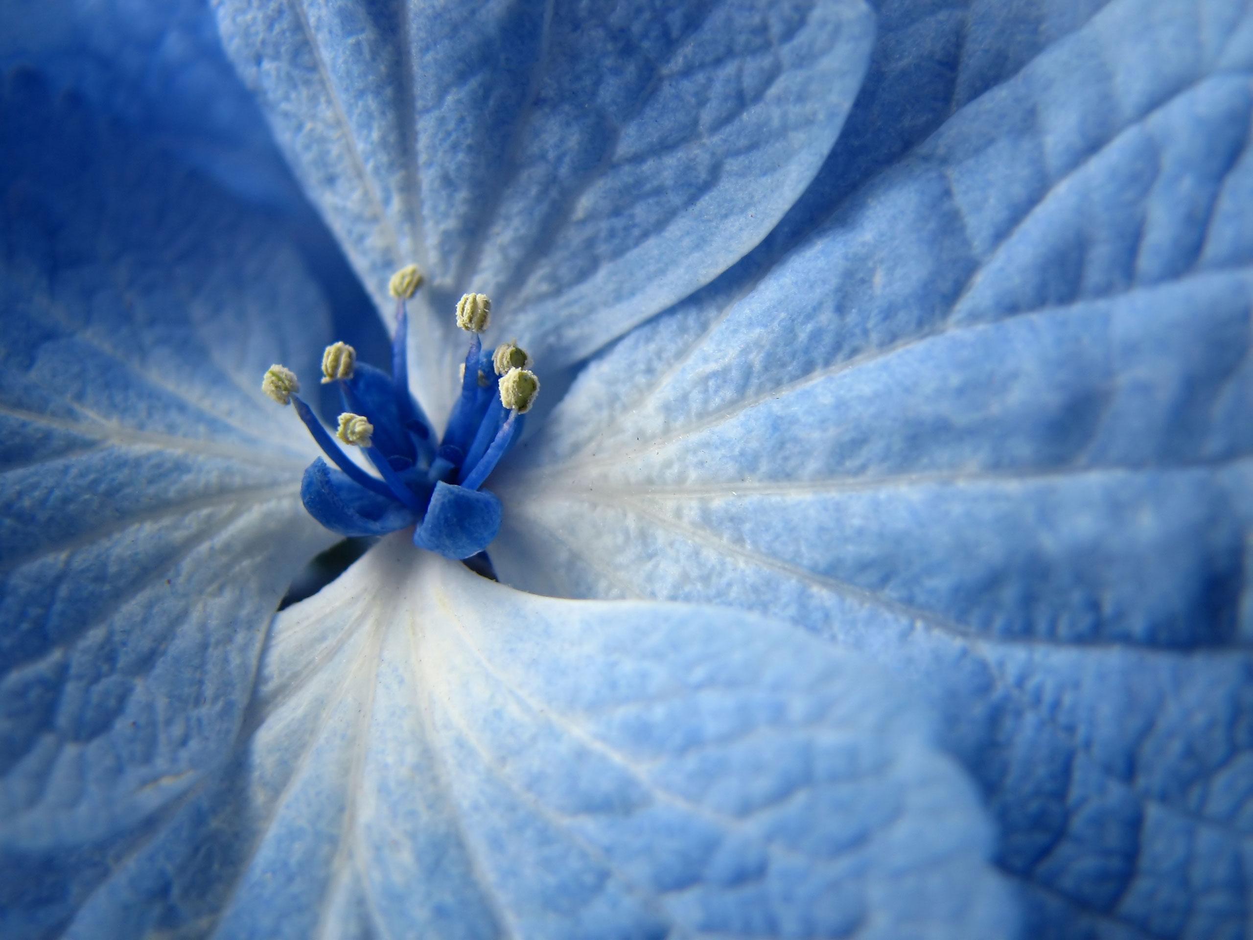 blue flowers wallpaper