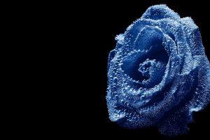 blue roses wallpapers flower
