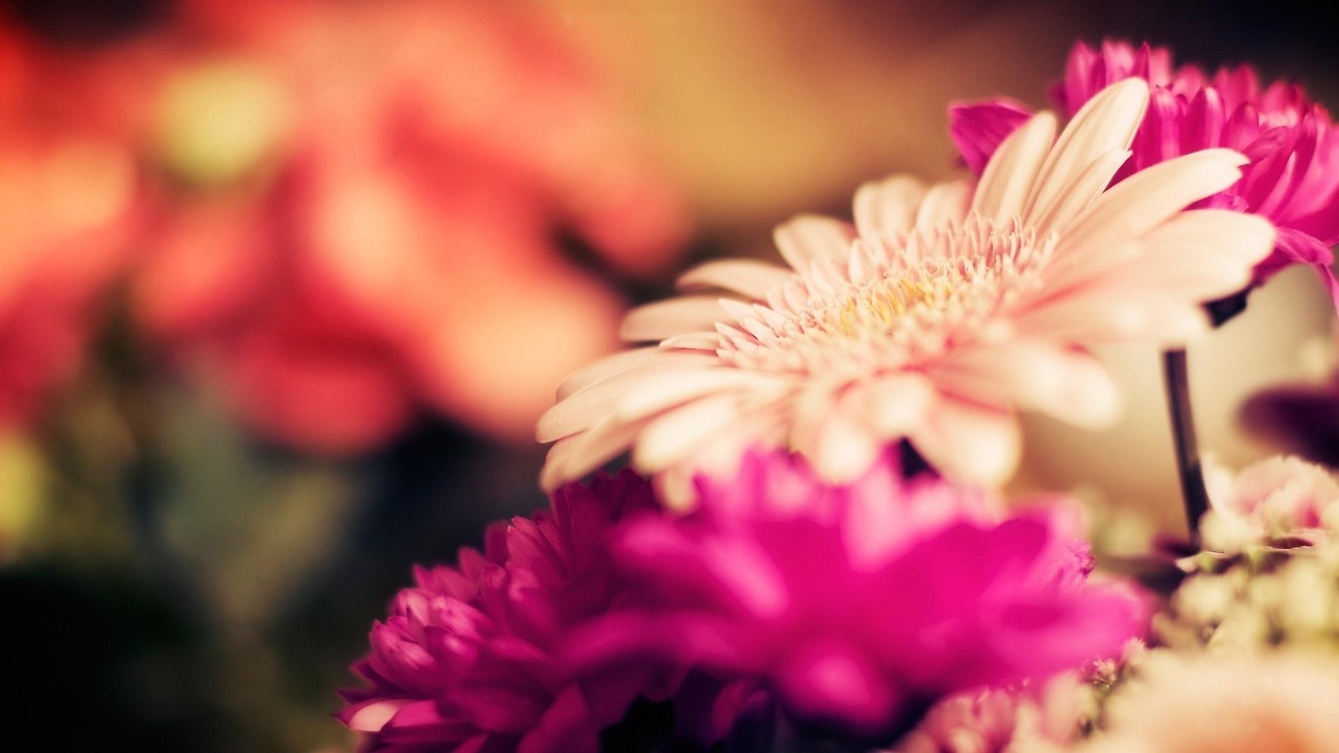 bright flowers hd