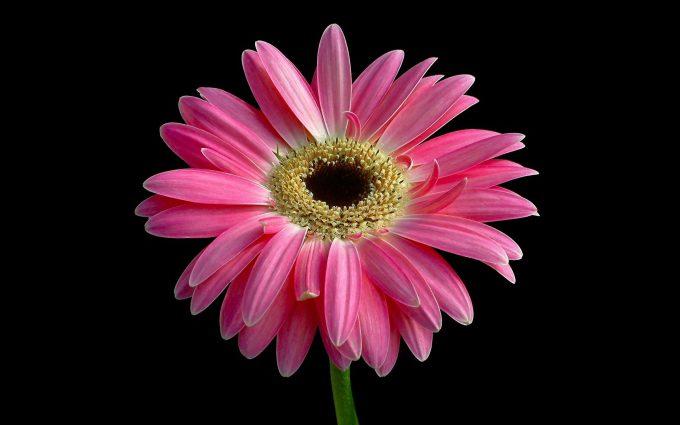bright flowers image