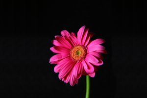 bright flowers pink 1080p
