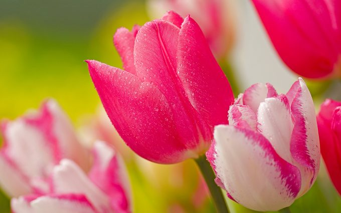 bright flowers pink images