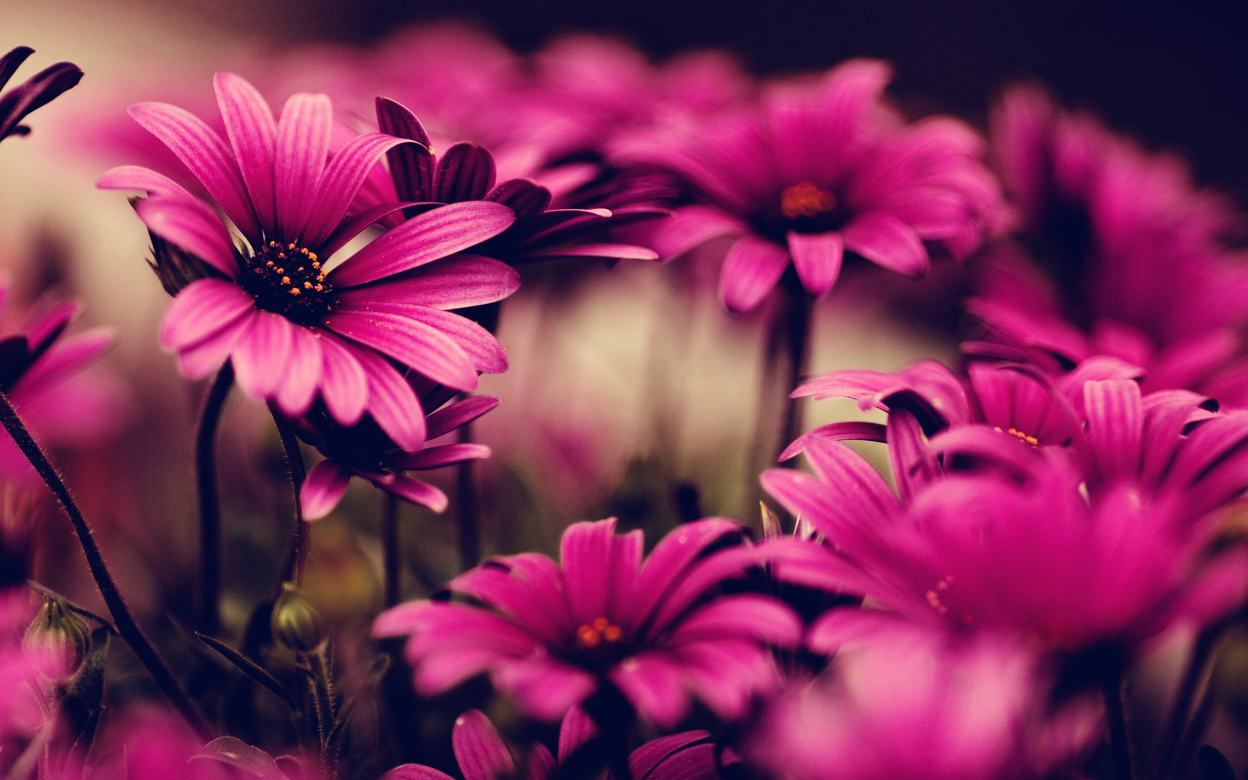 bright flowers pink