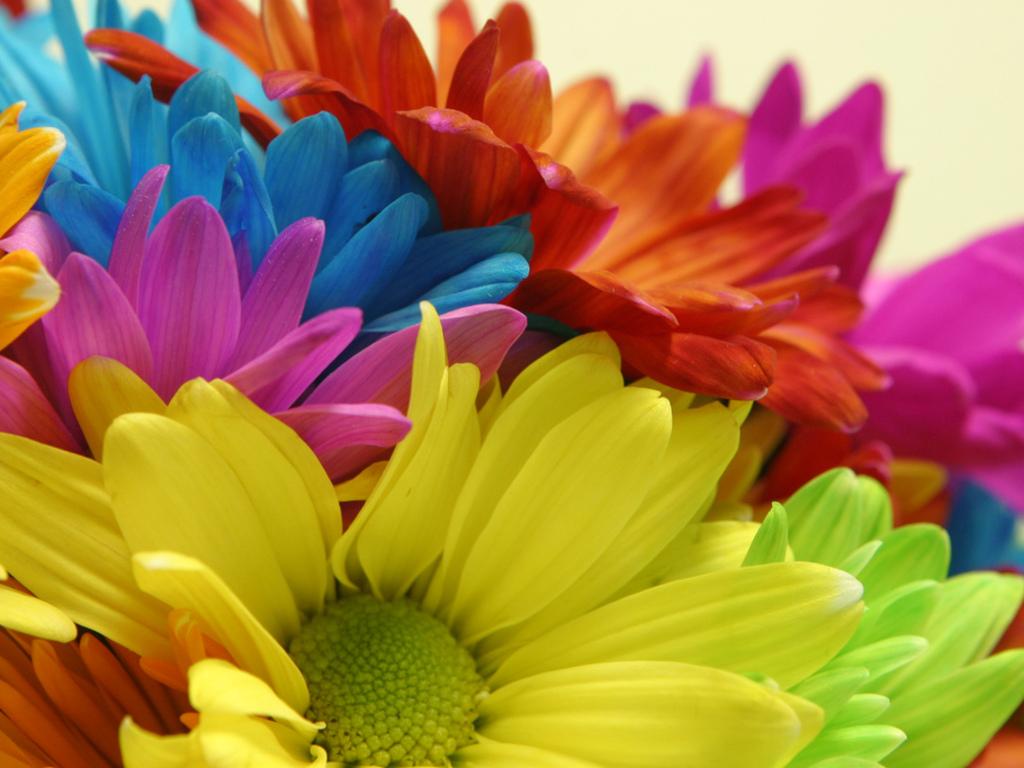 bright flowers rainbow
