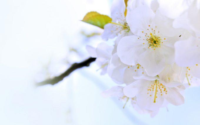 bright flowers white
