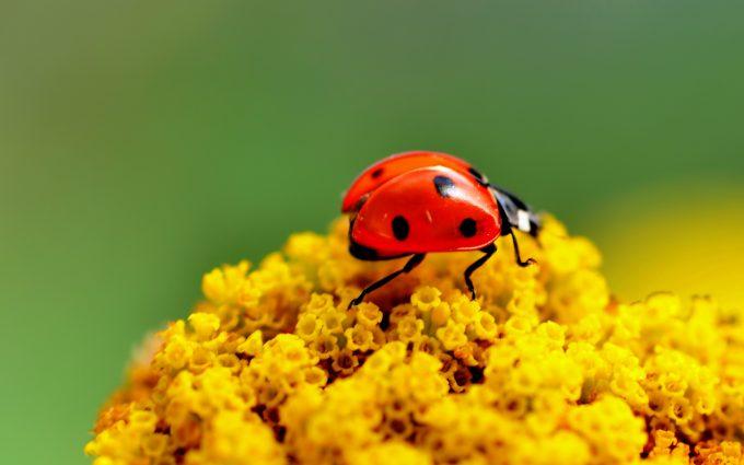bright flowers yellow