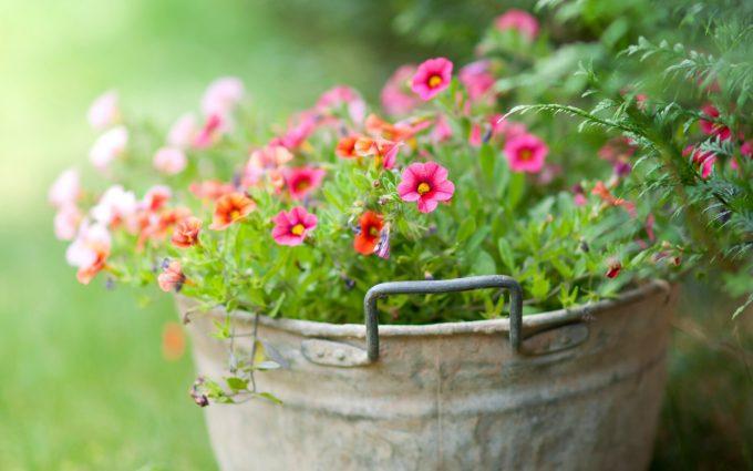 bucket flowers