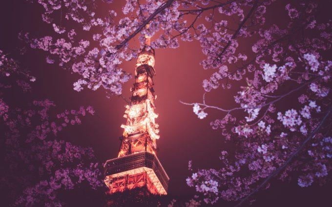 cherry blossom background 1080p