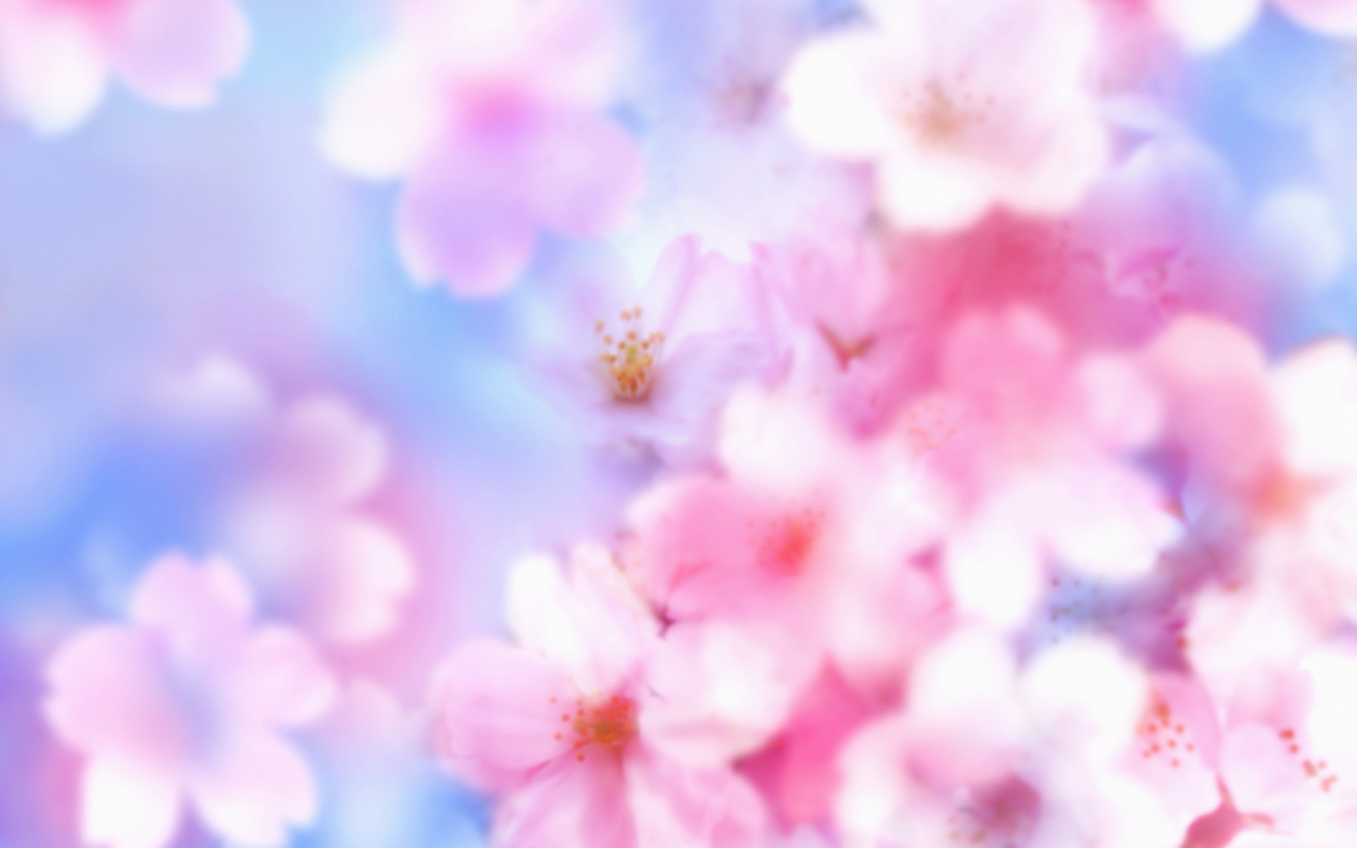 cherry blossom wallpaper 1920x1080