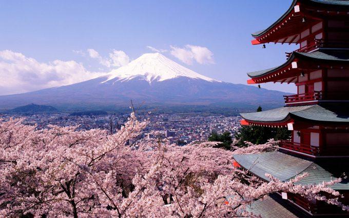 cherry blossom wallpaper japan