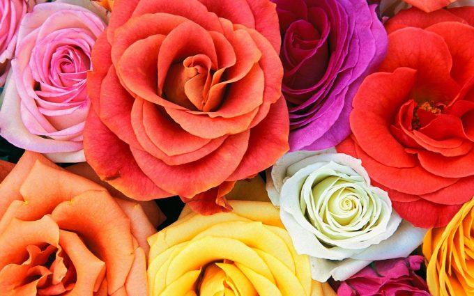 colorful flower wallpaper
