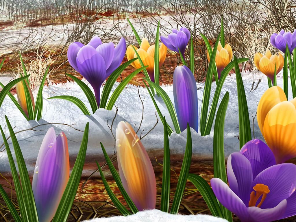 crocus flower nature