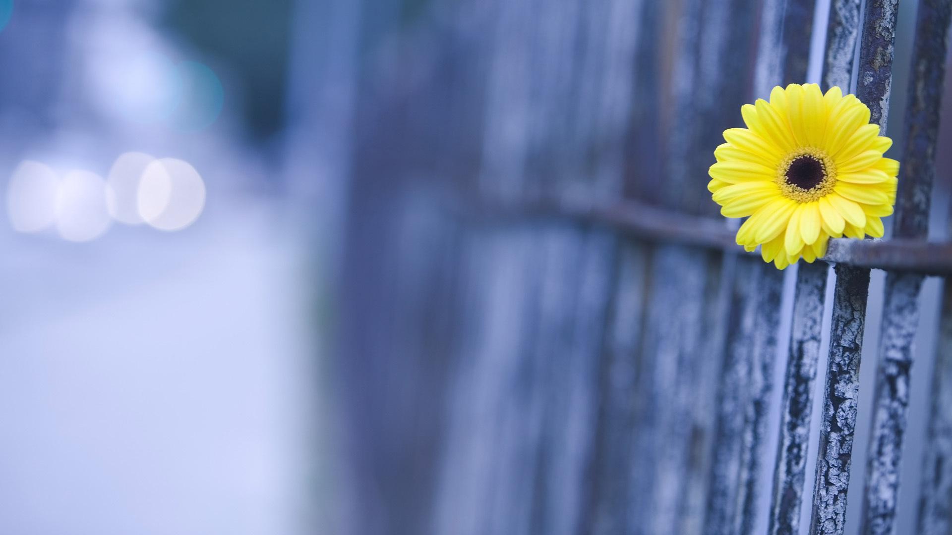 cute macro flower