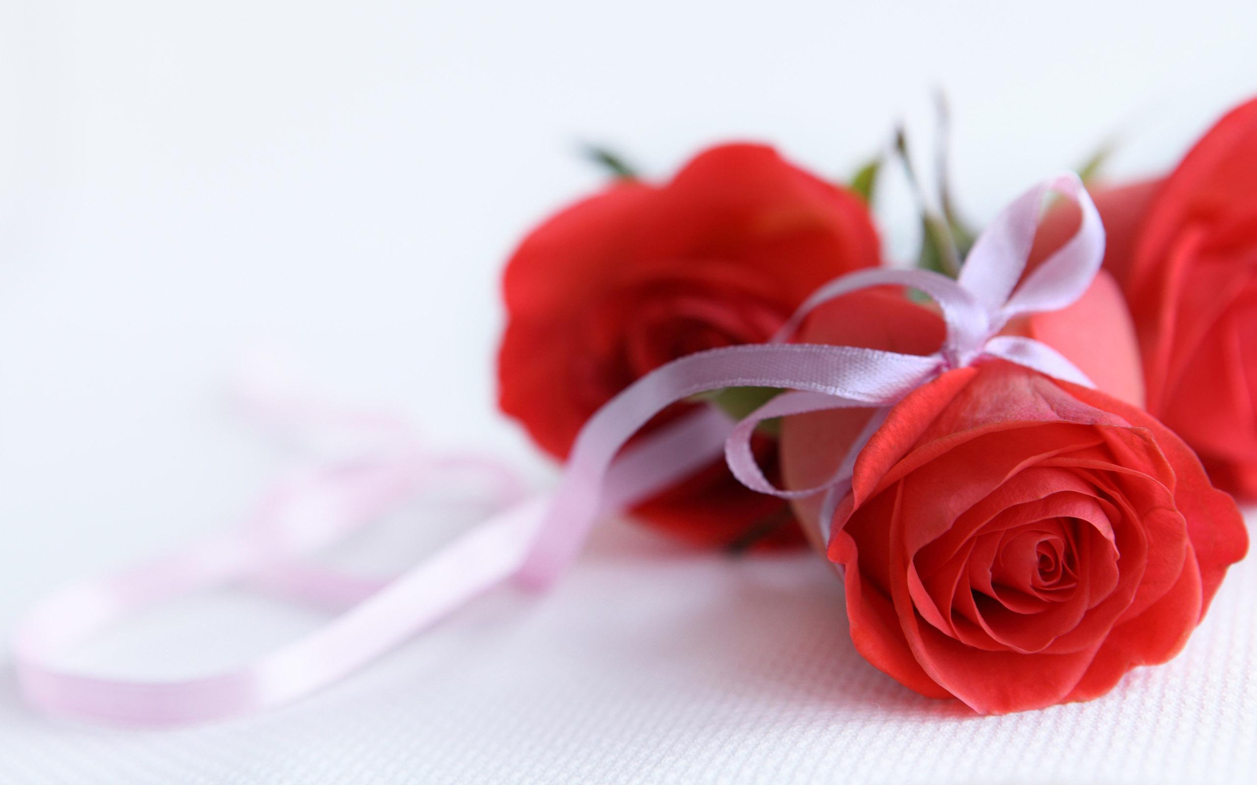 cute rose wallpapers