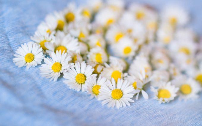 daisies A5