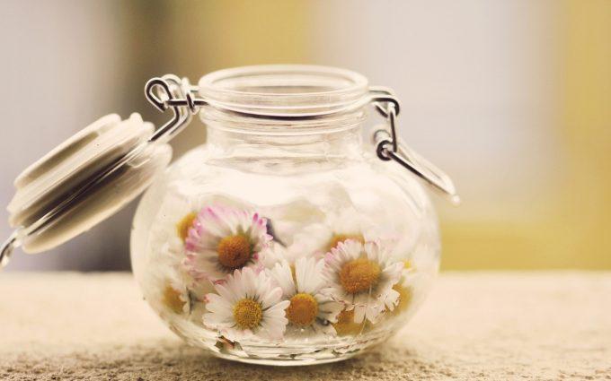 daisies A6