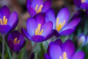 dark purple flower wallpaper